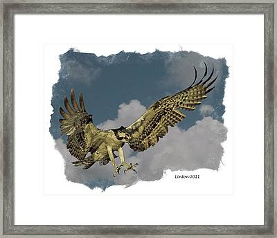 Raptor Framed Print by Larry Linton