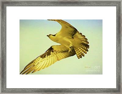 Raptor Osprey Framed Print