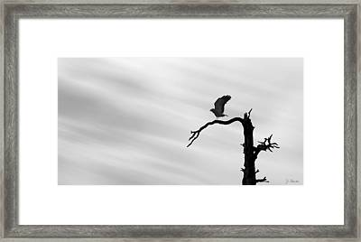 Framed Print featuring the photograph Raptor Silhouette by Joe Bonita