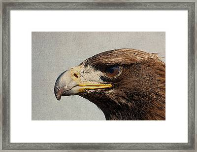 Raptor Wild Bird Of Prey Portrait Closeup Framed Print by Design Turnpike