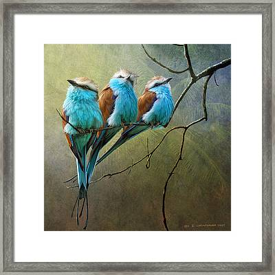 Raquet Tailed Rollers Framed Print by R christopher Vest