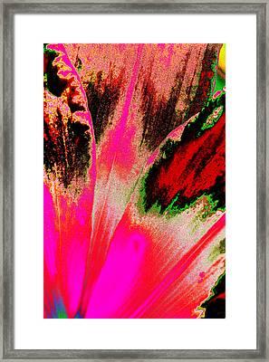 Rare Daylily Framed Print
