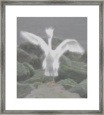 Framed Print featuring the photograph Rare Ghost Snowy Egret by John King
