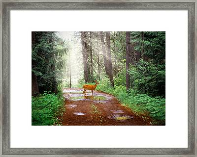 Rare Moment Framed Print