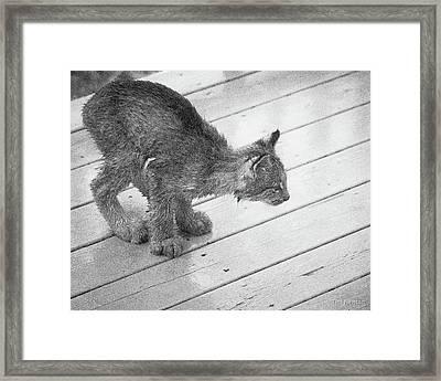 Crouching Kitty Framed Print
