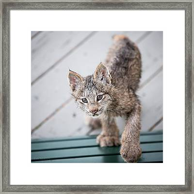 Does Click Mean Edible Framed Print