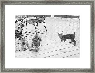 Relay Chase Framed Print