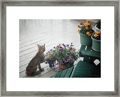 Swat The Petunias Framed Print
