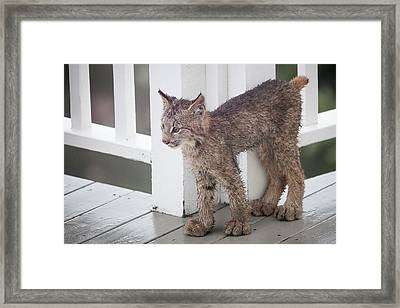 Laser Eyes Big Feet Framed Print