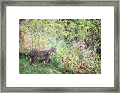 Ever Vigilant Framed Print