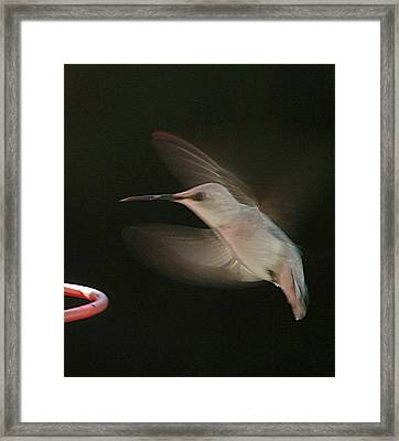 Framed Print featuring the photograph Rare White Hummer In Flight by Rick Friedle