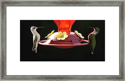 Rare White Hummingbird Framed Print
