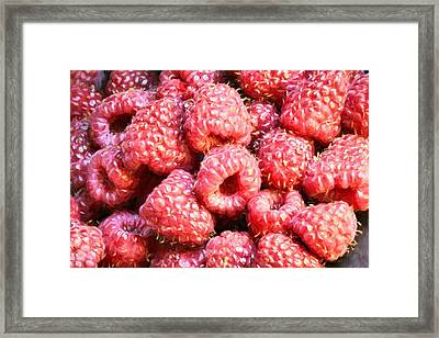 Raspberries  Framed Print by JC Findley