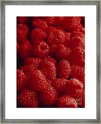 Raspberries Framed Print by Kim Lessel