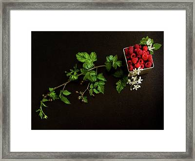 Raspberries On A Black Background Framed Print