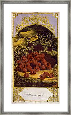 Raspberries Vintage Fruit Label Framed Print