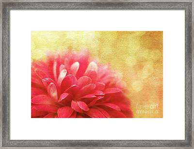 Raspberry Champagne  Framed Print by Beve Brown-Clark Photography