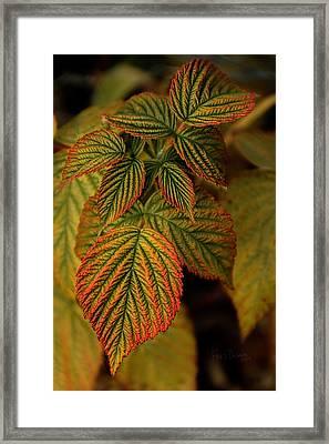 Raspberry Leaves Framed Print