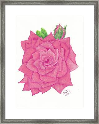 Raspberry Pink Rose Framed Print by Dusty Reed