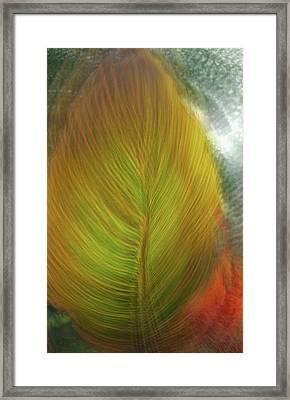 Framed Print featuring the photograph Rasta Hosta by Deborah Hughes