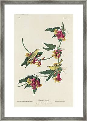 Rathbone Warbler Framed Print by Dreyer Wildlife Print Collections