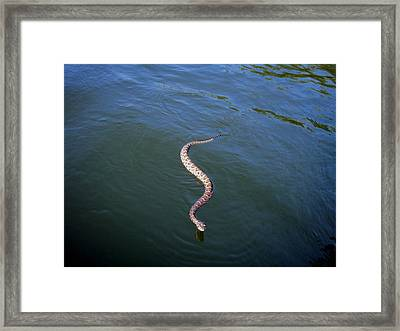 Rattle On The Water Framed Print by Evelyn Patrick