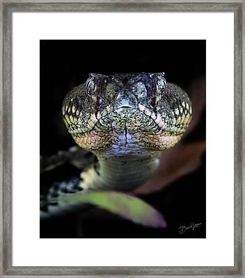 Rattler Eye To Eye Framed Print
