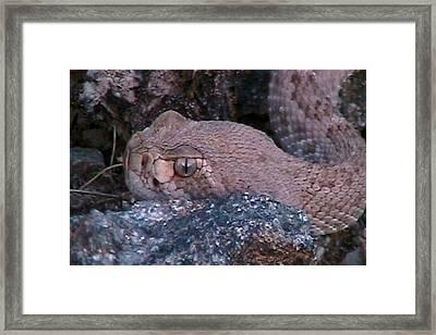 Rattlesnake Portrait Framed Print