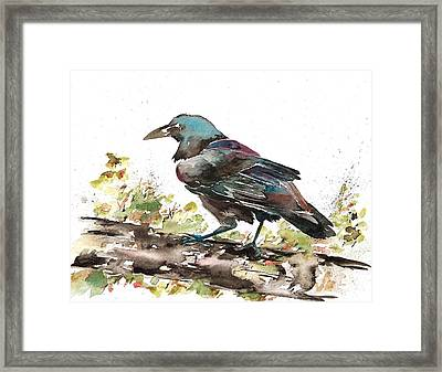 Raven 1 Framed Print