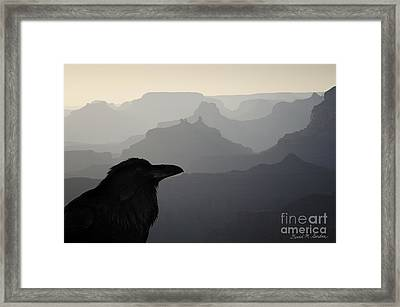 Raven And Grand Canyon Framed Print by Dave Gordon