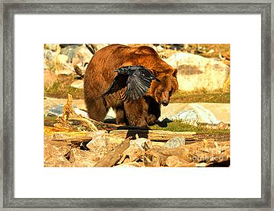 Raven And Kodiak Framed Print by Adam Jewell
