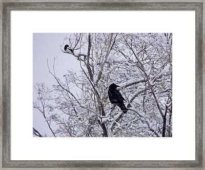 Raven And Magpie Framed Print