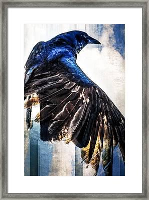 Raven Attitude Framed Print by Carolyn Marshall