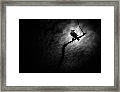 Raven, Death Valley Framed Print