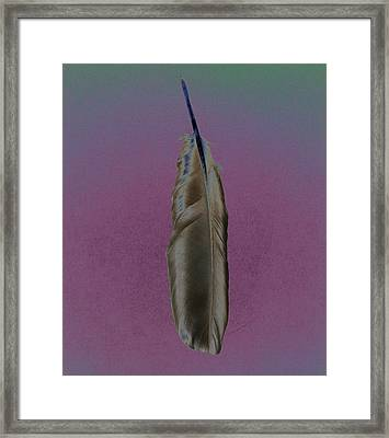 Raven Feather Framed Print
