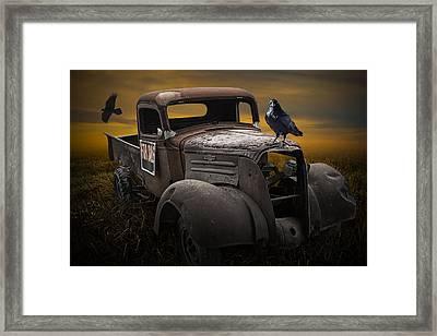 Raven Hood Ornament On Old Vintage Chevy Pickup Truck Framed Print
