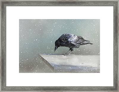 Raven In Winter Framed Print by Eva Lechner