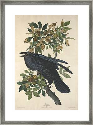 Raven Framed Print by Rob Dreyer
