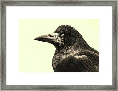Raven Framed Print by Martin Newman