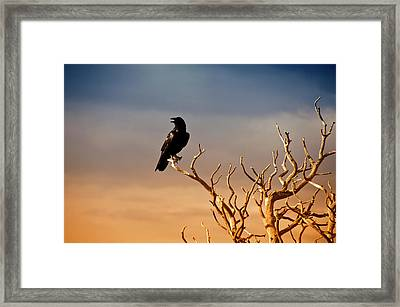 Raven On Sunlit Tree Branches, Grand Canyon Framed Print