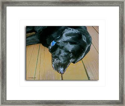 Raven Resting Framed Print by Brian Wallace