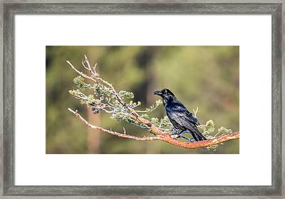 Raven Framed Print by Torbjorn Swenelius