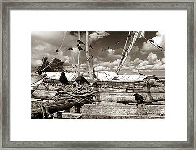 Ravens Framed Print by Robert Lacy