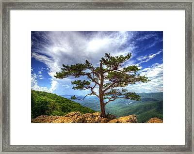 Ravens Roost Tree Framed Print