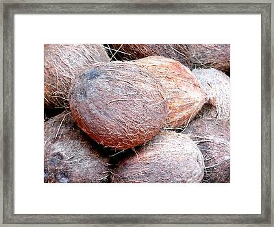 Raw Coconuts In A Supermarket  Framed Print