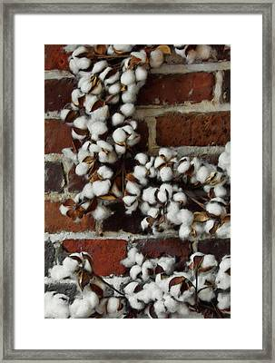 Raw Cotton Framed Print by JAMART Photography