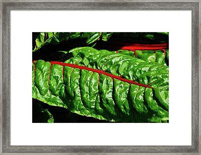 Framed Print featuring the photograph Raw Food by Harry Spitz