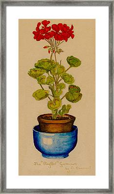 Ray-bet Geranium Framed Print