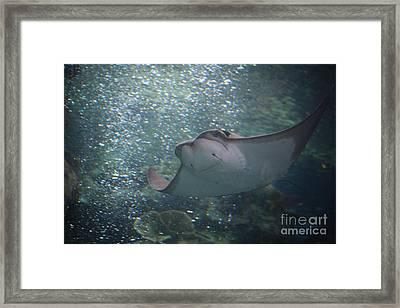 Ray Framed Print by Brenton Woodruff