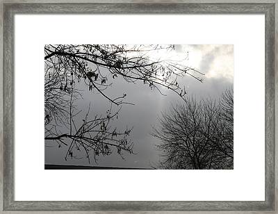 Ray Of Hope IIi Framed Print by Janey Loree